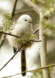 Bird sweetness