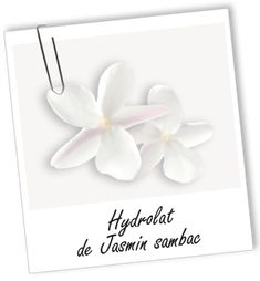 Eau aromatique Jasmin Sambac Aroma-Zone