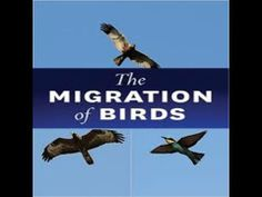 Migration of Birds , Animals for Kids -Lesson
