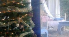 Navidad 2018 Christmas 2018. Blanca Rey properties&homesyler. Inmobiliaria especializada en propiedades con carácter. Proyectos de reforma y decoración. www.blancarey.com