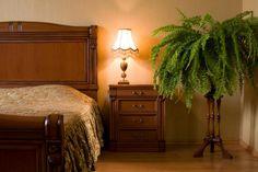 Kwiaty, rośliny doniczkowe idealne do sypialni