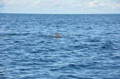 Met The Dolphin...