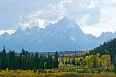 October's Gold - Grand Tetons - $295.00