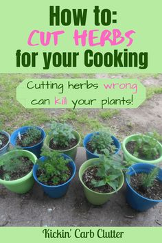 herb garden How to Cut Herbs for your Cooking: Cutter herbs wrong can kill your plants! Heres how to do it correctly! herb garden How to Cut Herbs for your Cooking: Cutter herbs wrong can kill your plants! Heres how to do it correctly! Garden Types, Outdoor Plants, Garden Plants, Plants Indoor, Container Herb Garden, Indoor Herbs, Potted Herbs, Compost Container, Herb Plants