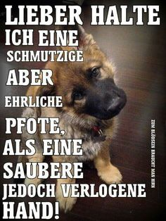 Here at EBENBLATT you can find the coolest and funniest dog shirts for dog lovers, have a look! Motivacional Quotes, True Quotes, Words Quotes, Funny Quotes, Cut Animals, Animals And Pets, Funny Animals, I Love Dogs, Cute Dogs