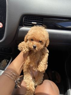 Super Cute Puppies, Cute Little Puppies, Cute Dogs And Puppies, Cute Little Animals, Cute Funny Animals, Baby Dogs, Cute Babies, Doggies, Tiny Puppies