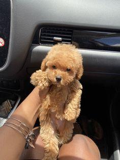 Super Cute Puppies, Cute Baby Dogs, Cute Little Puppies, Cute Dogs And Puppies, Cute Little Animals, Cute Funny Animals, Cute Babies, Doggies, Puppy Love