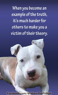 Wallace the Pit Bull #truth