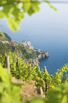 The village of Manarola, visible through the vines, Cinque Terre, Italy