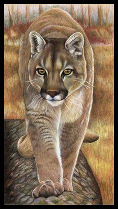 Mountain Lion, cougar by wildlife and colored pencil artist Gemma Gylling