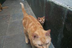 Nenen indo atrás da mãe Pimpa Maria - 2 meses