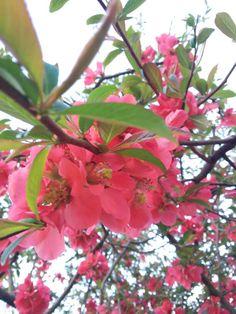 #pink; #flower; #tree :))