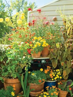 Lovely warm planting in this patio garden Verticle Garden, Potager Garden, Balcony Garden, Garden Beds, Garden Landscaping, Patio Plants, Outdoor Plants, Outdoor Gardens, Outdoor Spaces