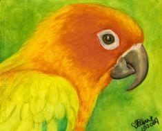 pastel animal drawings | ... Elvis II sun conure bird painting oil pastel original art portrait