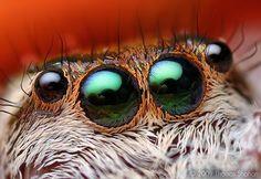 8 eyes.. pure art, isn't it?   Kleine lieve monsters - Joop.nl