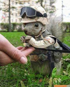 オイラは兵士。(実在するとか)