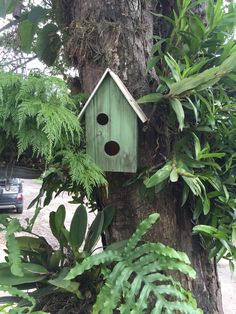 Bird house on tree
