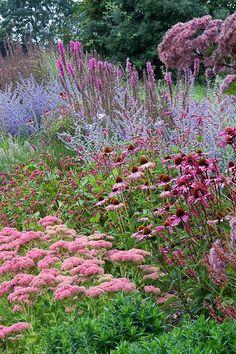 Pink-Rose-Purple/Blue. Sedum, Echinacea, Russian Sage...love the Russian Sage! Nx