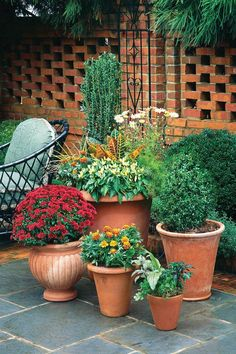 Spectacular Container Gardens: Mums, Marigolds, Peppers, & Crotons - Southern Living - Cluster containers in one space for high impact. Look at the group as a whole composition, and plant it as a cohesive unit with complementary and repeated colors. Garden Mum, Garden Pots, Vegetable Garden, Home And Garden, Container Gardening Vegetables, Container Plants, Planting Vegetables, Landscaping Tips, Garden Landscaping