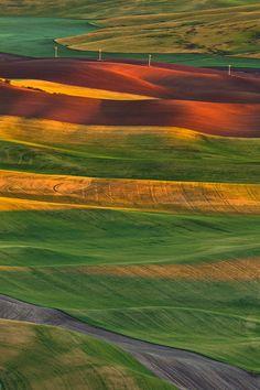 Lacy fields of.....,Palouse, Washington