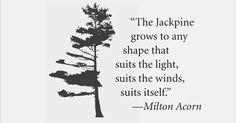 jack pines - Google Search