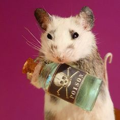 Taxidermy mouse with Poison bottle Taxidermy, Bottle, Unique Jewelry, Handmade Gifts, Animals, Vintage, Etsy, Kid Craft Gifts, Animales