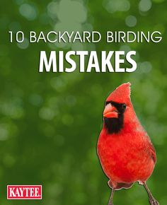 Read through these common backyard birding mistakes and avoid them when feeding your feathered friends!
