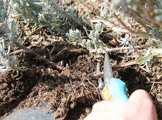 vágás Plants, Planters, Plant, Planting