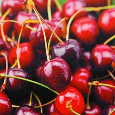 <li>Artist: Unknown </li><li>Title: Cherries Canvas Wall Art </li><li>Product type: Canvas Art </li>