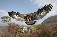 Birds of Prey Pictorial