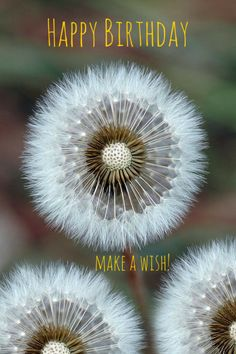 Happy Birthday : make a wish!