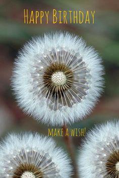 Happy Birthday : make a wish!