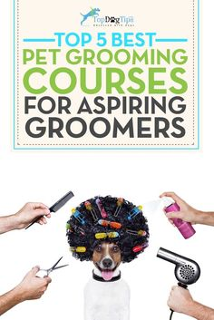 Have you thought about making your dog grooming talent a full time business? These best dog grooming courses online can help get you started! Dog Grooming Tools, Dog Grooming Shop, Dog Grooming Salons, Dog Grooming Business, Dog Grooming Supplies, Dog Clippers, Dog Nails, Dog Care, Pets