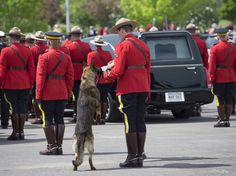 Constable Dave Ross' dog Danny broke the hearts of a nation Tuesday as he cried at the foot of his dead master's casket.  During the funeral procession earlier in the day, Danny jumped up to sniff Ross' RCMP stetson.  Farewell, & Thank-You to three RCMP Officer's killed.