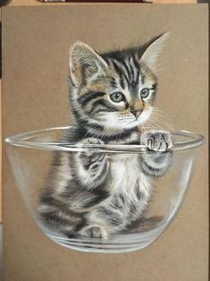 Kitty In A Bowl by ivanhooart on DeviantArt Cute Cats And Kittens, I Love Cats, Kittens Cutest, Polychromos, Cute Animal Drawings, Color Pencil Art, Here Kitty Kitty, Funny Animal Memes, Realistic Drawings