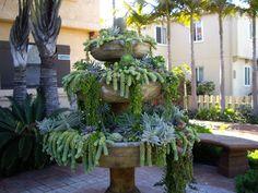 Succulent Pot Ideas | Creative garden ideas
