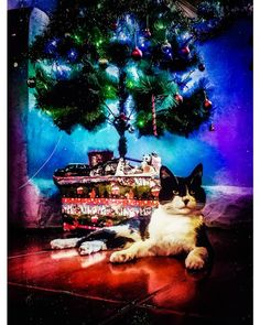 Christmas cat Christmas Cats, Merry Christmas, Magic, Movie Posters, Photography, Painting, Instagram, Art, Gatos