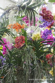 Colourful orchids known as Vandas adorn an immersive tunnel leading out of the temperate orchid zone at the 2018 Orchid Festival, at the Royal Botanic Gardens, Kew. Orchids Garden, Phalaenopsis Orchid, Botanical Art, Botanical Gardens, Water Dragon, Kew Gardens, Garden S, Installation Art, Flower Power