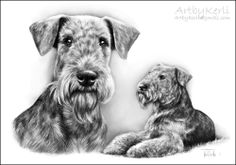 Airedale terrier Ares, pencil drawing (A4). Art by Kerli, 2011.
