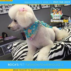 #boca #pet #dog #cat #grooming #petgrooming #care #florida #fl #doglover #catlover #doggydaycare #dogfun #dogplay #dogwash #petshop #dogboarding