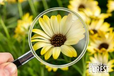 When was the last time you got a good look at a daisy? #discovertheforest