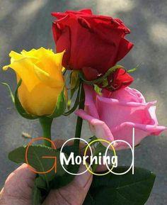 Tare liye apni jaan bhi derti do. Per tu muje meri terha pyar tu ker. Morning Rose, Good Morning Flowers, Morning Pictures, Good Morning Images, Yellow Roses, Red Roses, Good Day Sunshine, Rose Pictures, Good Morning Greetings