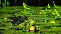 Visit the post for more. Danube Delta, Travel Set, Black Sea, Europe, Country, Rural Area, Country Music