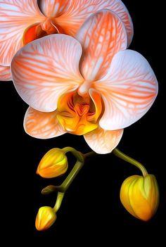 Unusual Flowers, Amazing Flowers, Pretty Flowers, Beautiful Flowers Photos, Orchidaceae, Flowers Nature, Orchid Flowers, White Orchids, Paper Flowers