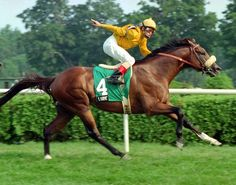 Lure (1989-) was sired by Danzig out of Endear; Grandsire: Northern Dancer; Damsire: Alydar. He hadcan excellent racing record of 14 wins in 25 starts (14-8-0). Among his many wins were the Gotham Stakes, Kelso Handicap, Turf Classic Stakes, Dixie Stakes, Elkhorn Stakes and was a two-time winner of the Breeders' Cup Mile (1992-1993). Lure was inducted into the Hall of Fame in 2013.
