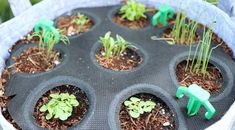 Growing fresh, organic herbs is now easy with Seedsheet. Our kit makes growing your own herbs simple and delicious! Edible Plants, Edible Garden, Herb Garden Design, Herbs Garden, Sustainable Farming, Home Vegetable Garden, Container Gardening Vegetables, Herb Seeds, Organic Herbs