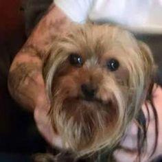 Sammy Jo Merchant - Cutest Pet May 2015 - PetVote Cute Animals, Cute Funny Animals, Cutest Animals