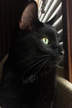 Want more black cat photos? Cat Having Kittens, Little Kittens, Cats And Kittens, Cats Bus, I Love Cats, Cool Cats, Beautiful Cats, Animals Beautiful, Baby Animals