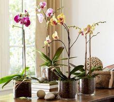 Decoración con orquídeas