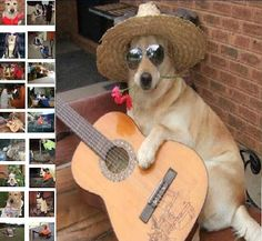 Funny dog plays guitar,plays piano and does 18 different funny things!